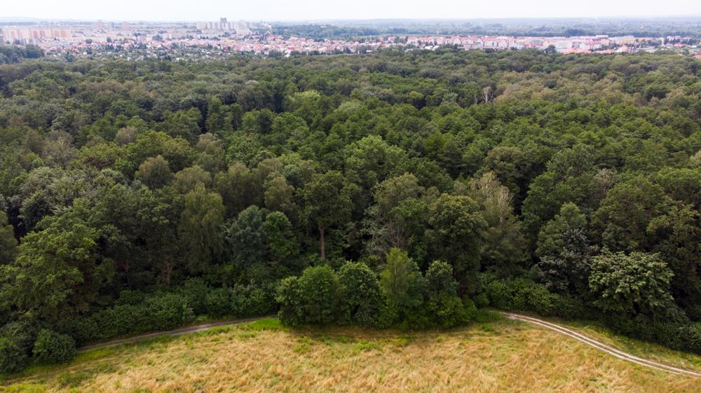 las zwierzyniec